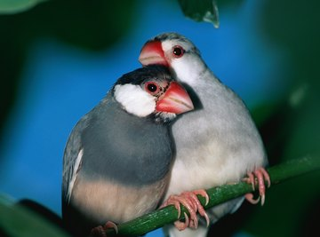 Both male and female finches participate in raising young.