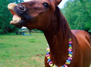 Roan horses can be chestnut, blue tinged or strawberry colored.