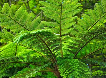 Endangered Plants of the Philippines