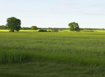 Grass prairies are common on broad coastal plains.