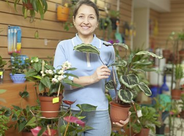 A woman holds a plant in a garden nursery.