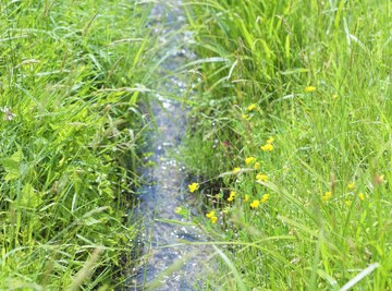 Add an artificial creekbed to your garden to control water runoff.