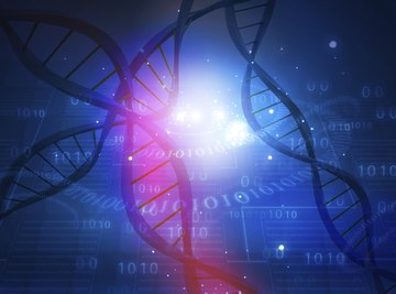Chromosomes contain DNA, the genetic