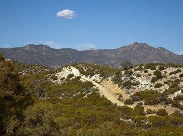 A desert ecosystem