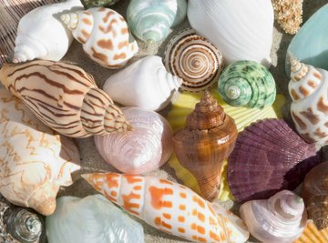 How Are Seashells Formed