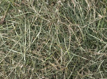 Grass clippings.
