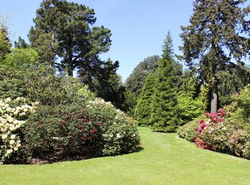 A beautifully manicured garden with various types of trees and shrubs.