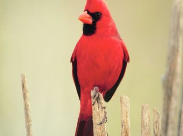Birds can be bright and colorful.