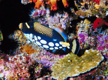 The coral reefs of the Philippines are at risk from the trade in live reef fish.