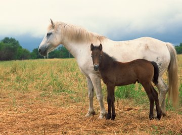Horses proliferated during the Miocene due to grassland expansion from a drier climate.
