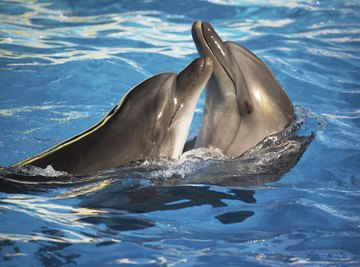 Dolphin species can range from 4 feet to 30 feet.
