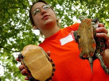 Herpetologist with turtles