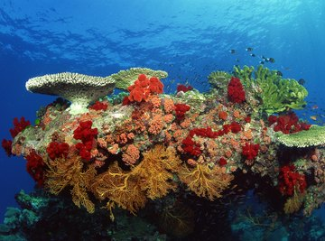 Corals can be hard or soft and are part of marine life.