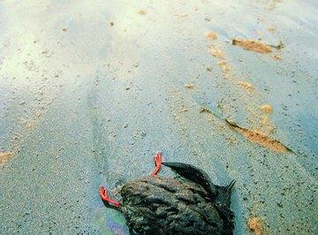 Oil Spill Information for Kids