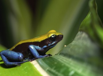 What Animals Show Commensalism in the Rain Forest