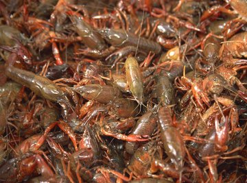 Crayfish is a popular food in many parts of the world.