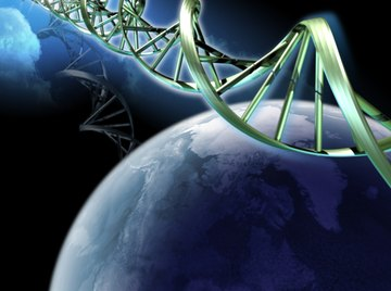 DNA maintains genetic continuity from generation to generation.