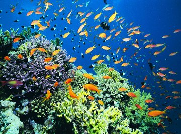 Coral reefs are a type of marine ecosystem