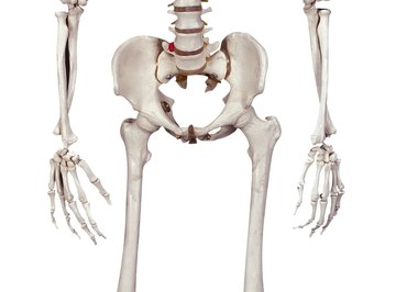 The calcium that makes your bones hard is actually a light metal.