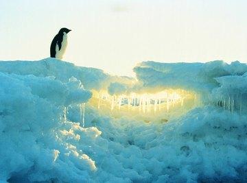 Antarctica is the largest arid landmass worldwide; it's technically a desert.
