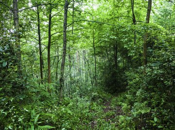 Small clearing in a rain forest.