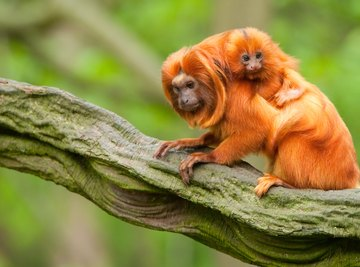 Animals Found in the Tropical Evergreen Forest