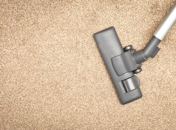 Frequent vacuuming removes food sources for carpet beetles.