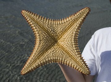 A boy on the beach holding up the underside of a starfish.