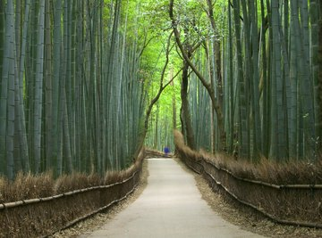 A path through a bamboo forest in Japan.