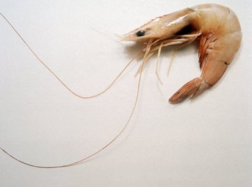 Shrimp have nervous systems with components similar to those found in other animals, including humans.