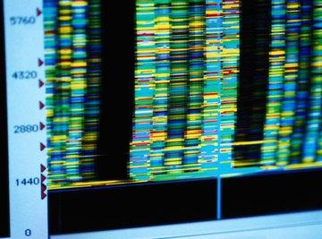 DNA information on a computer model.