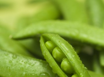 Gregor Mendel's experiments with peas showed how traits like round seeds are inherited.