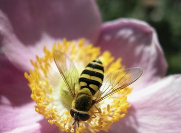 Example of synergy: The bee gets fed by the flower, which is fertilized by the pollen carried by the bee from another flower.