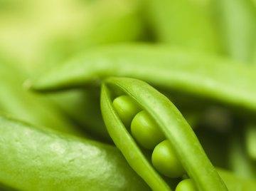 Smooth peas dominate wrinkled ones.
