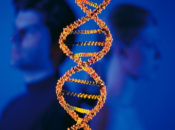 Chromosomes are made up of DNA and can be thought of as a string of genes.