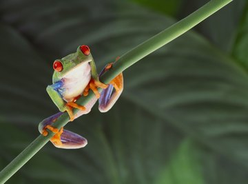 Frogs breathe through their lungs, and through their moist skin.