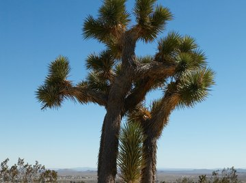 The Mojave Desert experiences very little precipitation and has very low humidity.