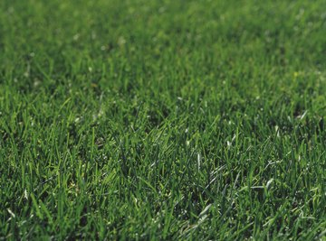 Herbicides help lawn care crews maintain flawless turf.