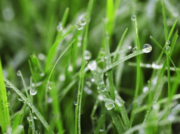 Dew results when cooling air becomes saturated with humidity.