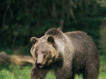 The bear's thick fur helps keep him warm while he sleeps.