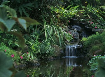 The rainforest is a biome that is rich in exotic plant and animal life.