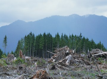 Clearcut harvesting dramatically changes the physical and biological environments within watersheds.