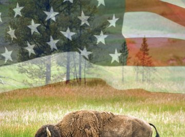 The bison is an iconic symbol of the American west.