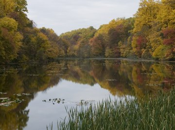 Bodies of Water in the Deciduous Forest