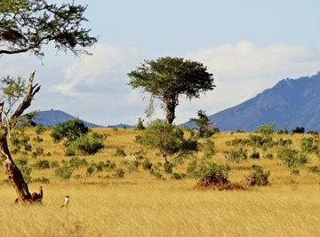 African savanna desert