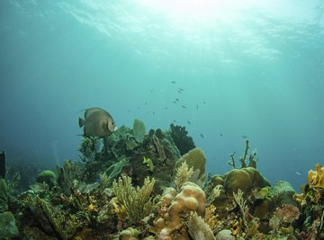 Coral, algae and other plants growing in a reef.