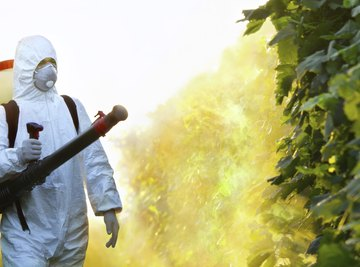 Man spraying chemical pest control on plants