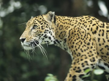 Heterotrophs & Autotrophs in the Tropical Rainforest