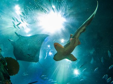 What Type of Animals Do Marine Biologists Study?