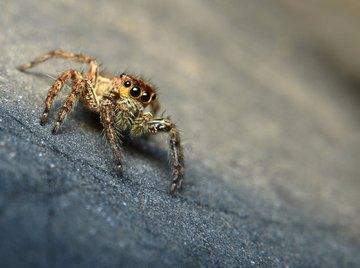 A spider crawls into a basement corner.